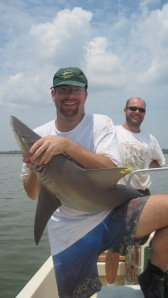 The sandbar shark (pictured here in Charleston Harbor, South Carolina) is one of the biggest coastal sharks in the world.